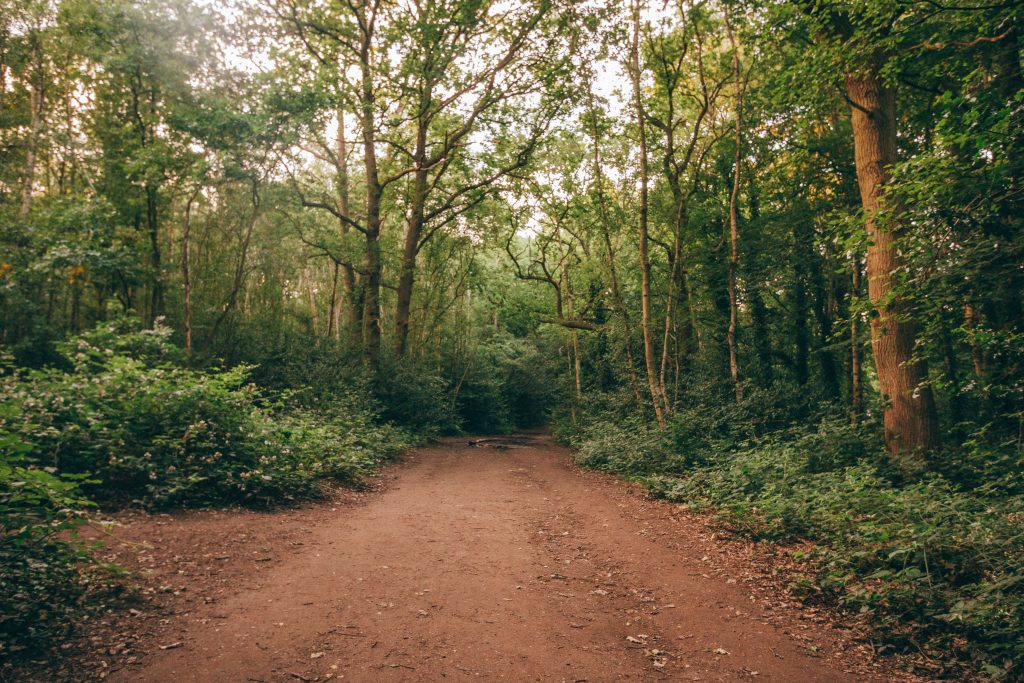 Wimbledon Common trail running route